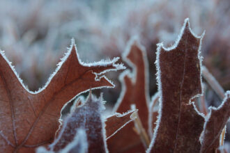 Ann-Marie Woods The Advent of Frost