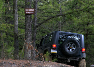 Jeep in the woods