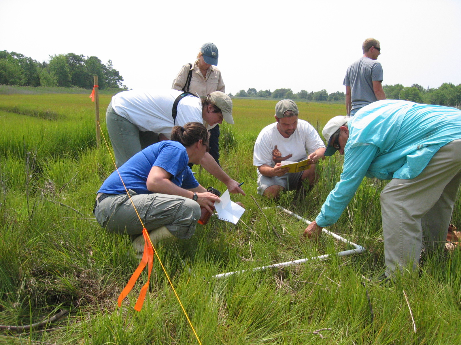 Life Science Field Training Transect Salt Marsh