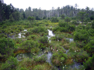 Pine Barrens Wetland
