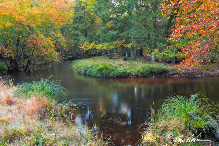 Batsto River in the New Jersey Pine Barrens by Albert Horner