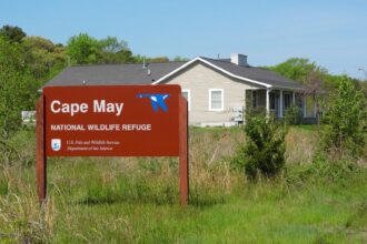 cape may national wildlife refuge