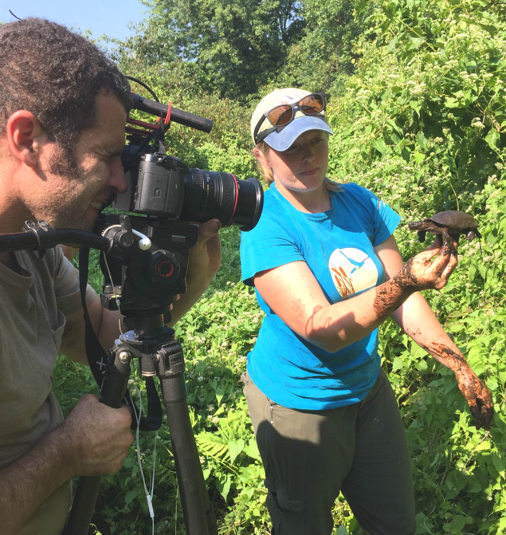 videotaping of bog turtle