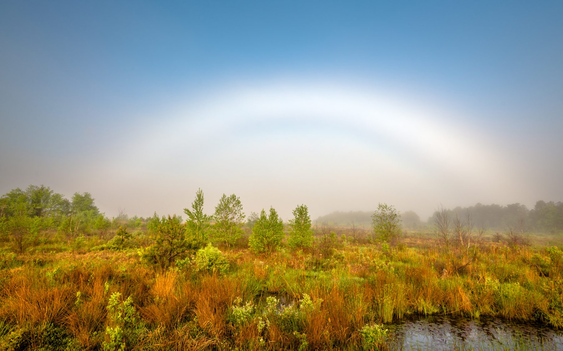 "pinelands photograph ""Fog Bow"" by Michael Neuhaus"