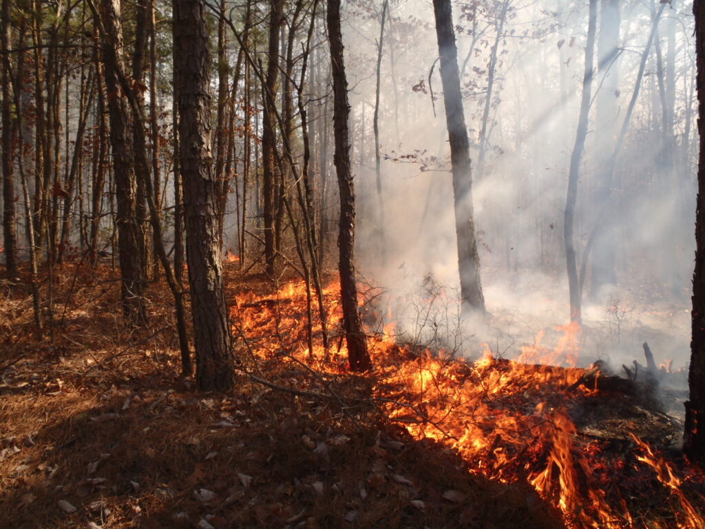 Prescribed fires in the Pinelands help reduce risk of wildfires.