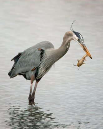 Catch of the Day by Sara Ascalon