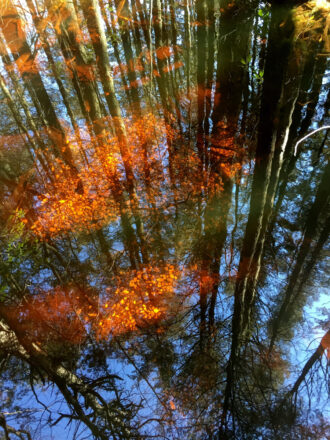 Reflections by Robert Cobb