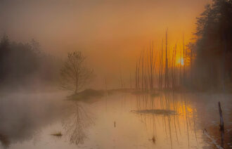Sunrise in the Pinelands by Thomas Dolan