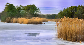 Cold Afternoon at Collier's Mills by Terry Donofrio