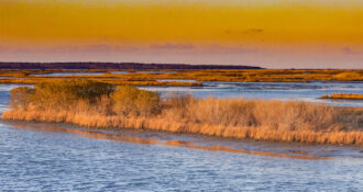 Golden Hour by Terry Donofrio