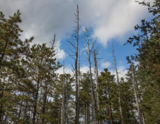 Pinelands Forest by Terry Donofrio