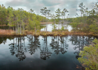 Pond Reflection by Terry Donofrio