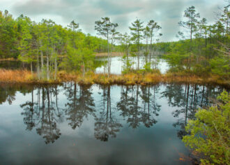 Reflections by Terry Donofrio