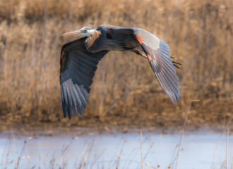 Soaring Over a Pinelands Waterway by Terry Donofrio