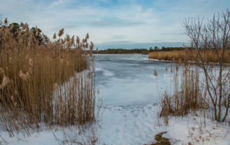 Winter Time in Pinelands by Terry Donofrio