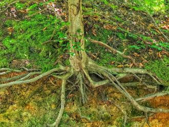 Pinelands Roots by Jeff Feeny