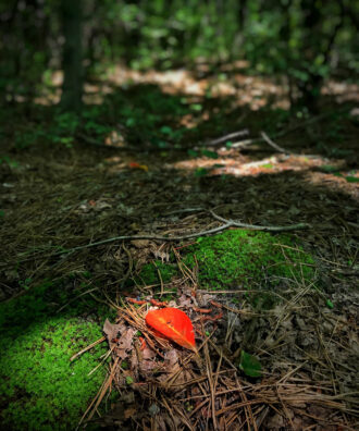 Red Leaf by Jeff Feeny