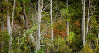 Early Fall in the Pinelands by John Giatropoulos