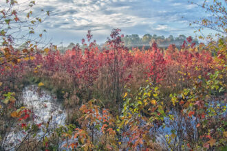 Fog Over Foliage at Black Run Preserve by Amy L Golden