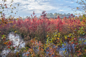 Fog over Foliage in Black Run Preserve by Amy L Golden