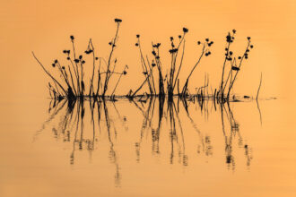 Simple Pinelands Reflection by Amy L Golden