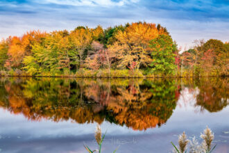 Falling for the Pine Barrens by CHRIS HOLLINGSWORTH