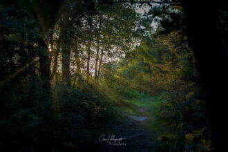 The Lights at the end of the Barren Trail by CHRIS HOLLINGSWORTH