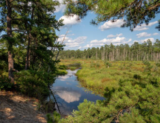 Summer Day Along the Mullica by Laura Hawkins