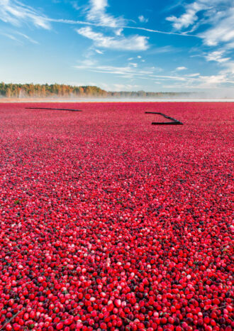 Cranberry Morning by Christopher Huston