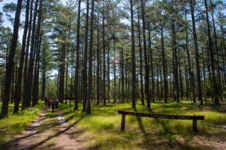 Students walk through the Silas Little Experimental Forest by Micah Langer