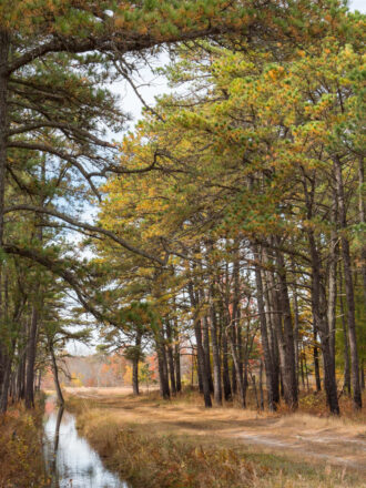 Fall Curves by Barbara Lawrence