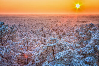 Sunset Beaming Over Frozen Pinelands by Larry Lyons