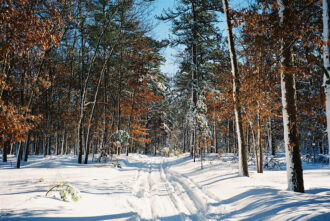 Snow Day Trails by Michelle O'Donnell