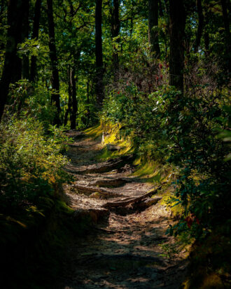 Nature's Staircase - Summer by Elizabeth Piñeiro-Doyle