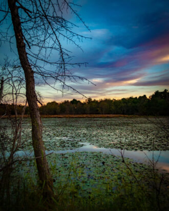 Watercolors Over the Bog by Elizabeth Piñeiro-Doyle
