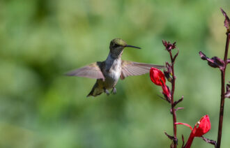 Hovering by David Plagge