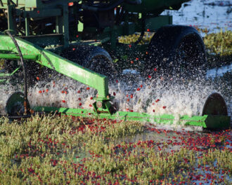 Cranberry Harvest by Mary Rigby