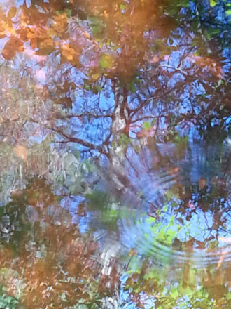 Reflections by Janet S Schmidt