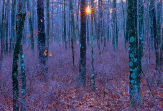 """Winter Morning, Wharton State Forest by Eric (""""Rick"""")  Vizzi"""