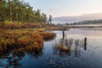 Early Morning Bog by Patricia Worley