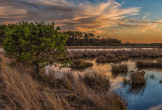 Bog Days End by Barry Nealis