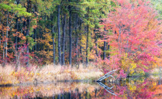 Pretty In Pink by Charles Aitken