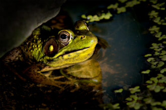 Frog in the Pond by Dennis Abriola