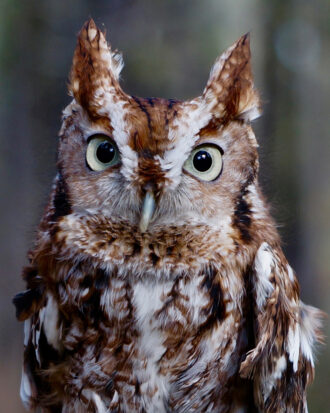 What a Hoot by Ellie Winter