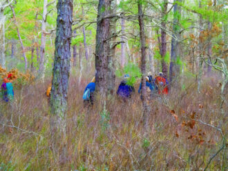 A Walk In The Woods by dick gouldey