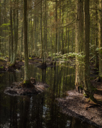 The Pines by J Michael Williams