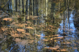 Reflections on Tom's Pond by Joan Farrell