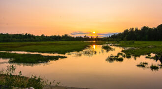 bog at sunset by betsey karl