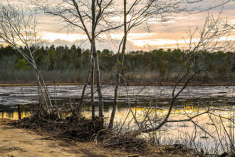 bog at winter by betsey karl