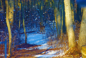 Into The Woods by Marian DeSalvo